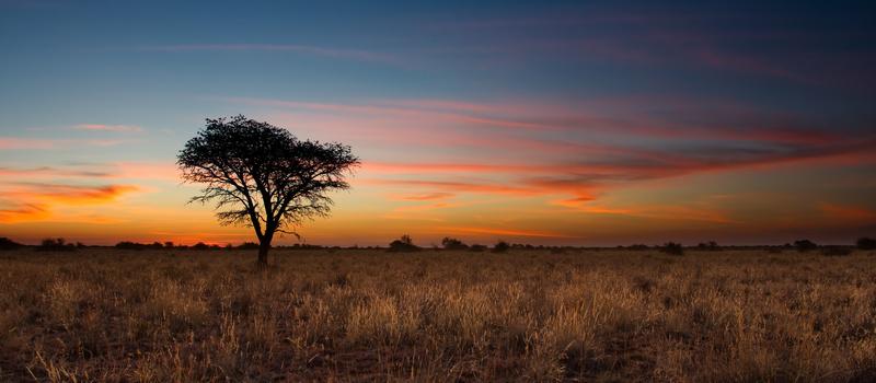 """中国电商如何出海非洲?B2C非洲电商「Kilimall」认为""""本土化""""是关键"""